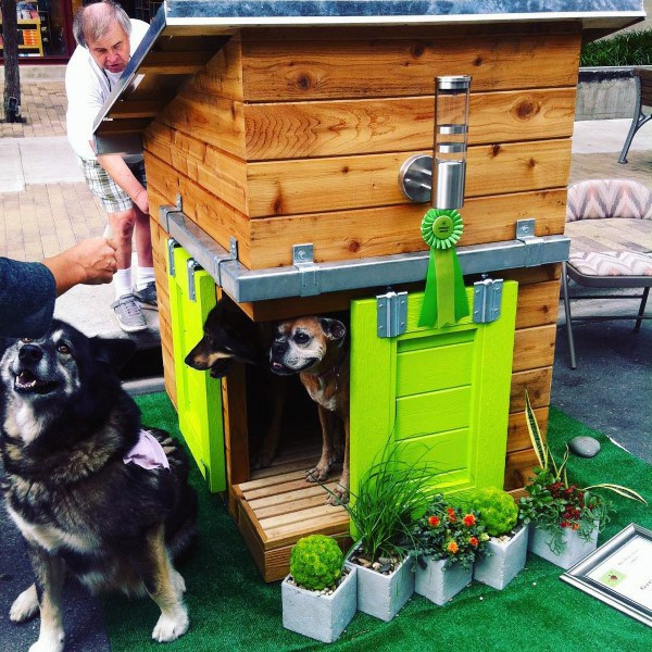Cool Dog Houses With Cedar Wood Planks And Lime Green Sliding Doors