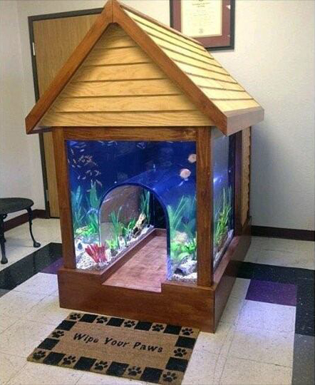 Cool Outdoor Dog House