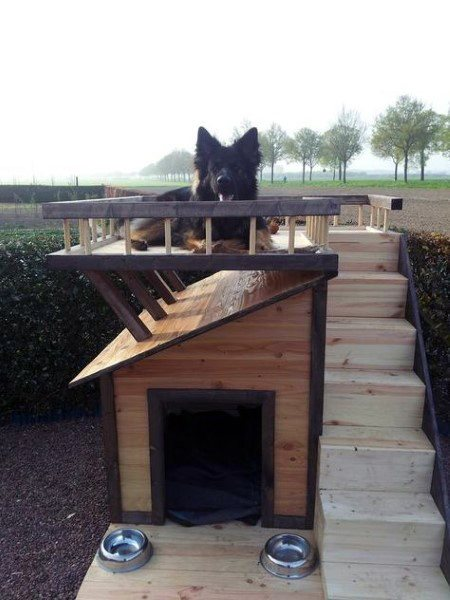 Wood Stairs Cool Dog Houses For Large Dogs
