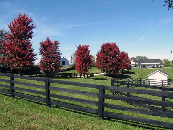 Traditional Designs For Black Stained Wooden Fence